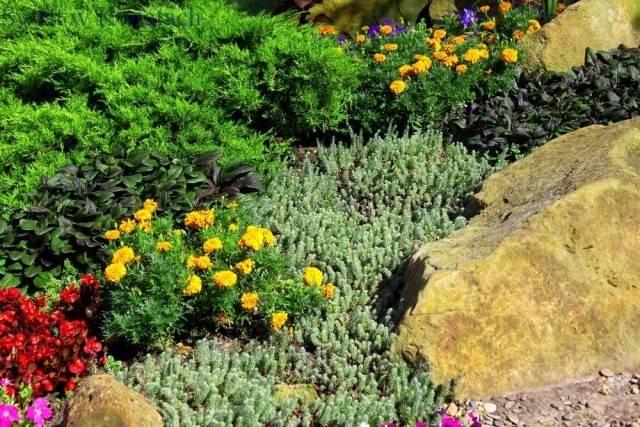 rośliny jednoroczne i rośliny skalne rosnące na skalniaku