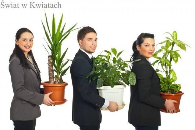 Kwiaty do biura, dobór roślin które ożywią i ozdobią biuro