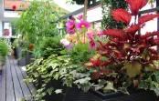 Kwiaty na taras