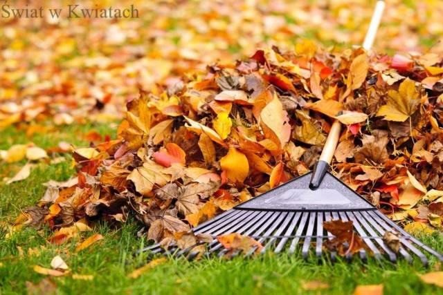 zbieranie liści jesienią