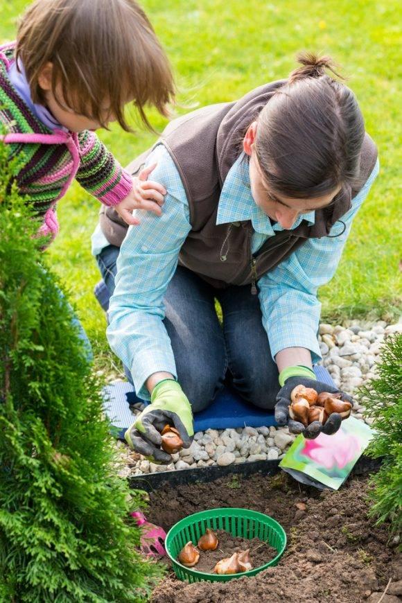 sadzenie cebulek kwiatowych