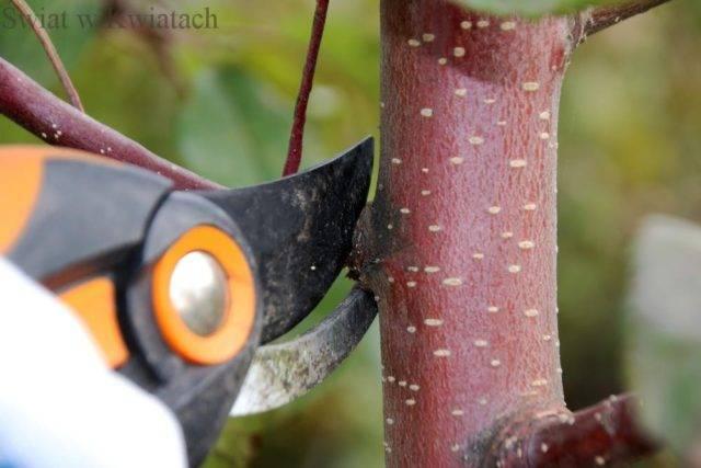 jesienne prace w sadzie to przycinanie drzewek i krzewów