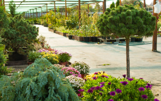 Jak dobierać rośliny do ogrodu?