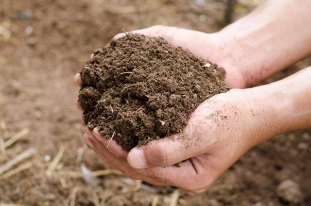 zastosowanie kompostu w ogrodzie