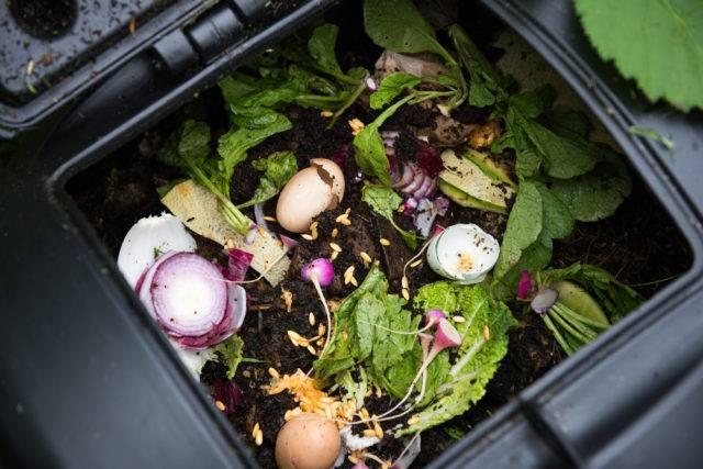 Dlaczego kompost jest nawozem naturalnym w ogrodzie