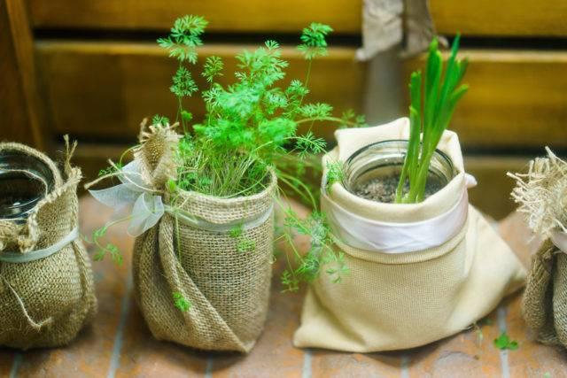 Rośliny z resztek