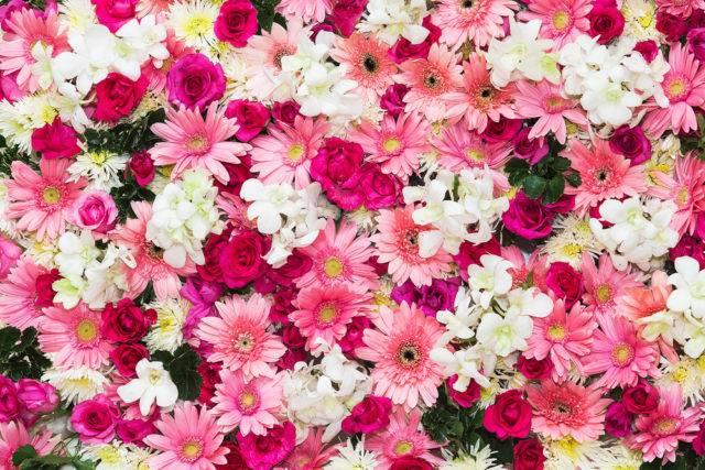 znaczenie i symbolika kwiatów