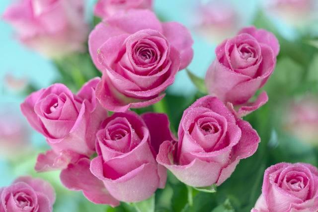 znaczenie i symbolika kwiatów pod względem kolorystycznym