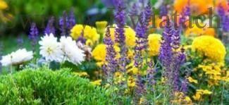 Swiat w kwiatach