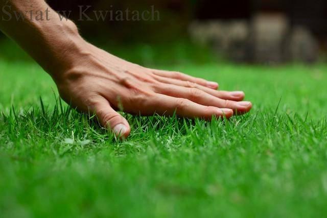 Jak założyć trawnik – krok po kroku?