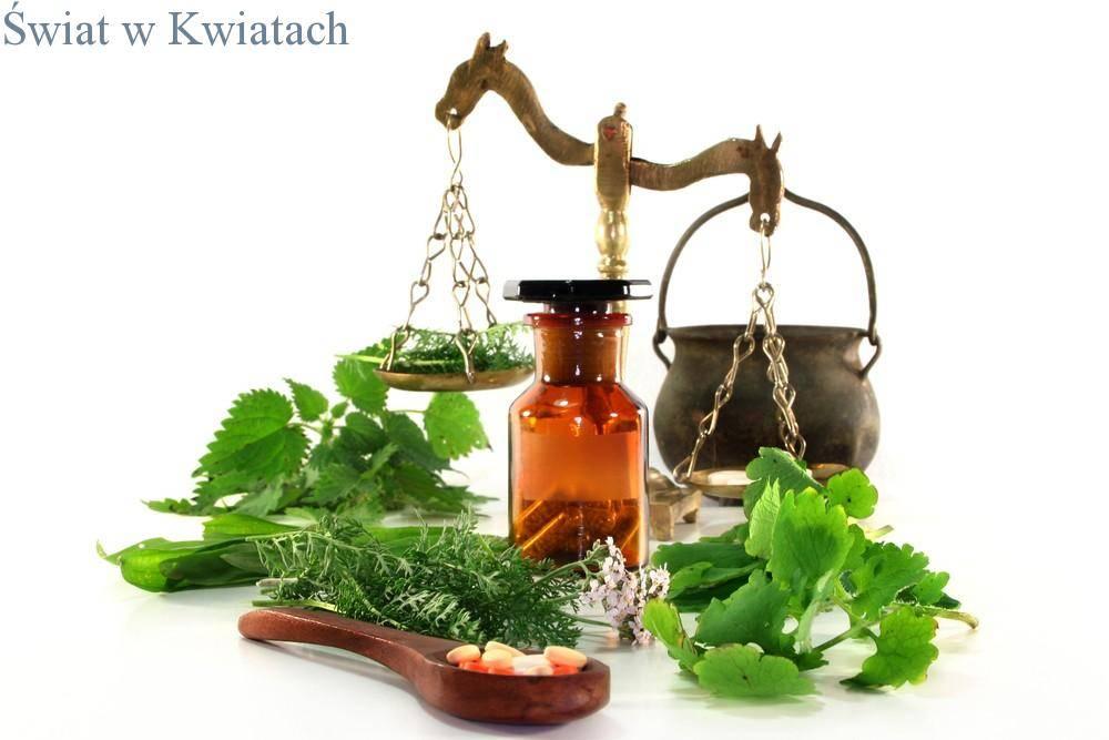 świeże zioła w medycynie lekarskiej