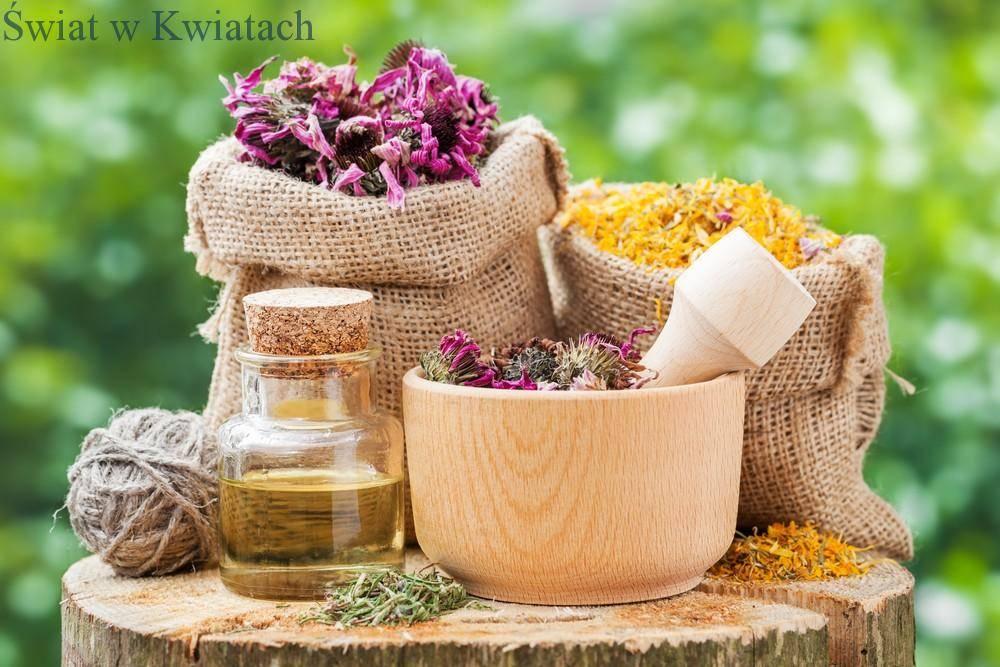 ziołolecznictwo, lecznicze zioła stosowane w medycynie