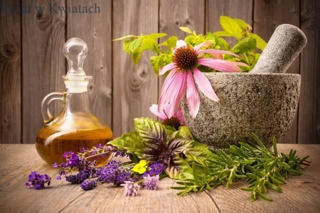 Używane w kosmetyce części roślin i formy ich stosowania