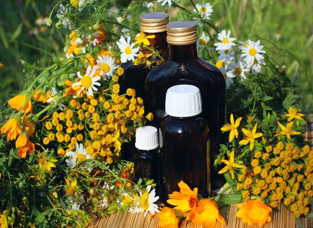 zioła używane w kosmetyce