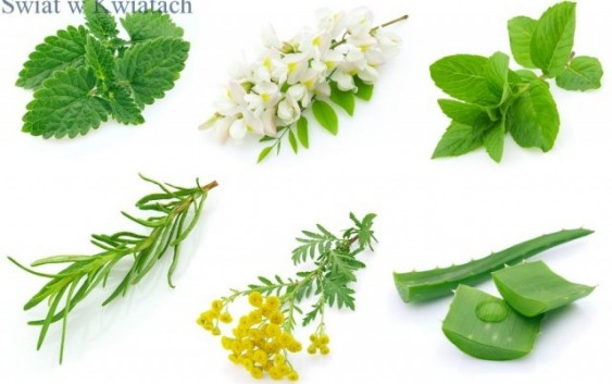 Rośliny kosmetyczne ich definicja, działanie i wykorzystanie