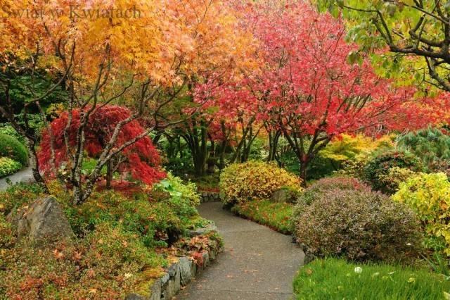 Krzewy ozdobne w naszym ogrodzie
