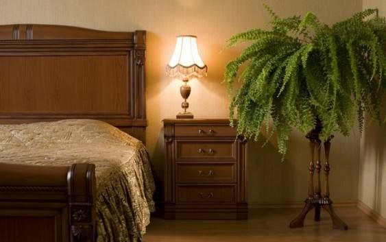Kwiaty do sypialni, które sprzyjają zdrowemu odpoczynkowi