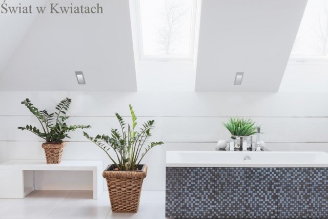 kwiaty do łazienki