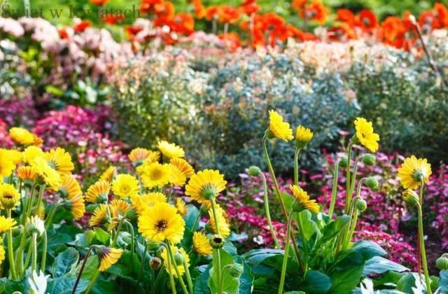 rabata z kwiatami