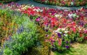 Rabaty kwiatowe