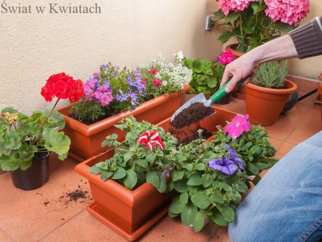 sadzenie kwiatów