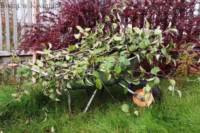 Jesienne prace w sadzie