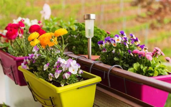 Dobór Pojemników Do Uprawy Roślin Na Balkonie Lub Tarasie