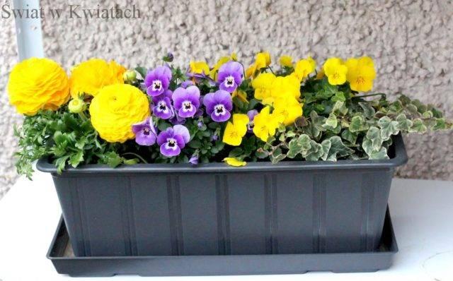 dobór pojemników do uprawy roślin na balkonie donica plastikowa