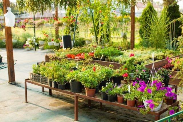 jak dobierać rośliny do ogrodu przy domu