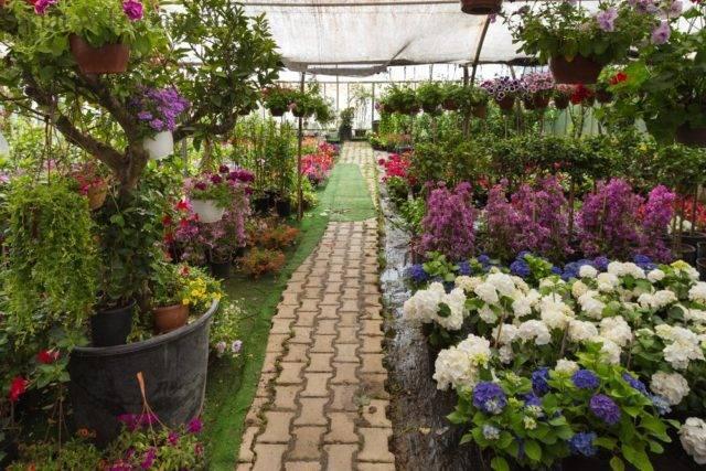 jak dobrać rośliny do ogrodu