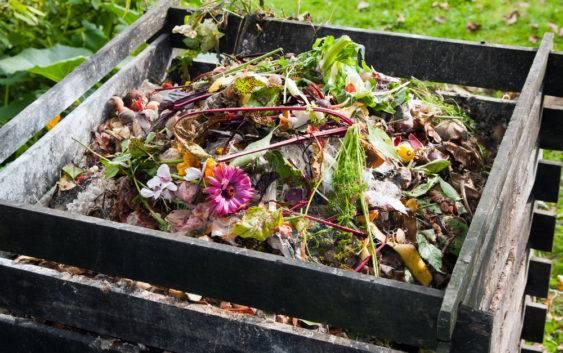 Dlaczego kompost jest nawozem naturalnym?