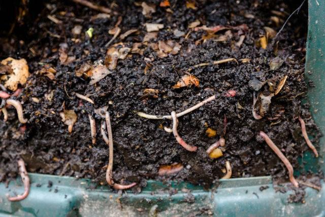 naturalny kompost