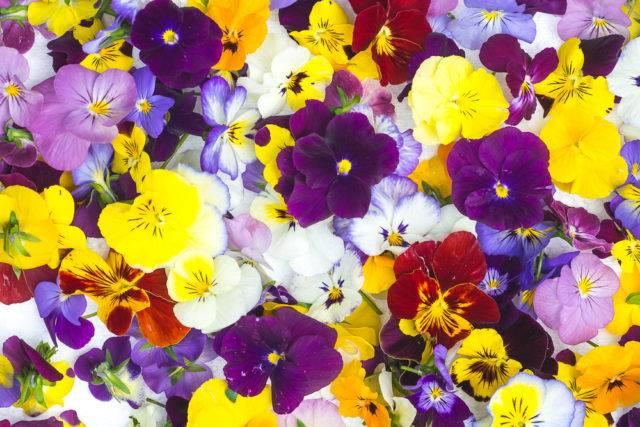 znaczenie i symbolika kwiatów ciętych