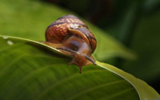 Jak wytępić ślimaki w ogrodzie?