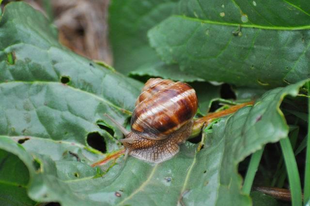 jak wytępić ślimaki w ogrodzie działce
