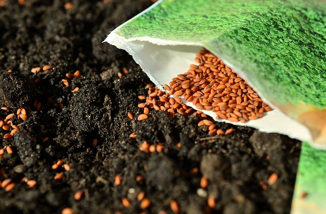 siew nasion na grządkach