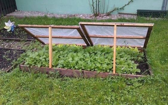 Wiosna w ogrodzie warzywnym