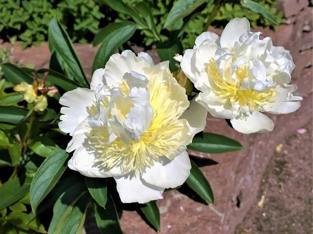 wiosna w ogrodzie warzywnym dzielenie bylin