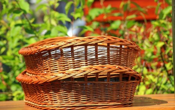 Roślina do wyrobu koszyków