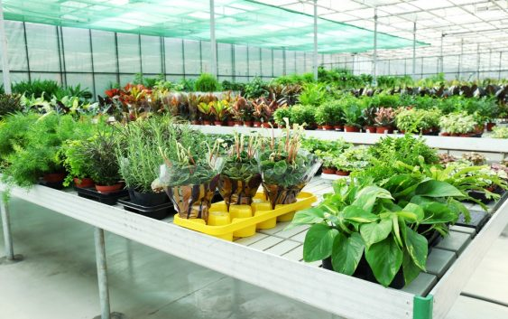 Rośliny Doniczkowe Definicja Rośliny Wymagania I Pielęgnacja