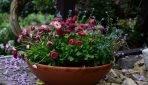 Kwiaty doniczkowe cieniolubne do ogrodu