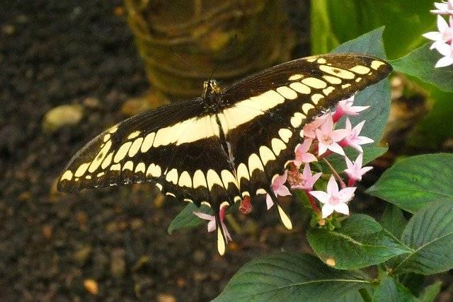 ile skrzydeł ma motyl owad