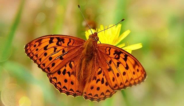 budowa motyla