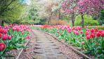 Goczałkowice ogrody do zwiedzania