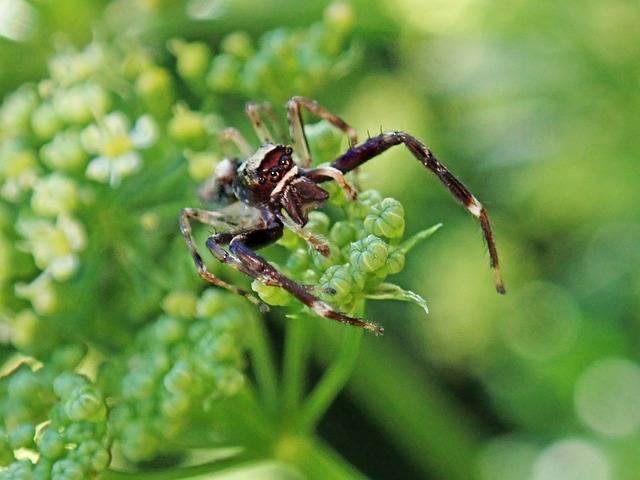 pożyteczne owady w ogrodzie pająki