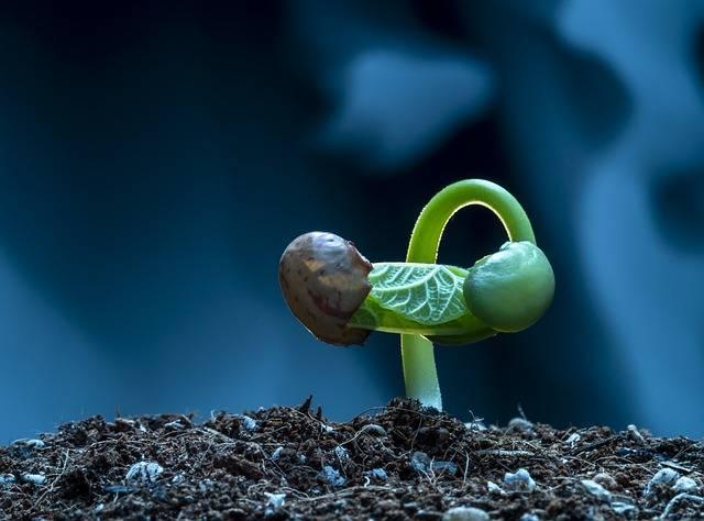 Czy rośliny rosną przez całe życie