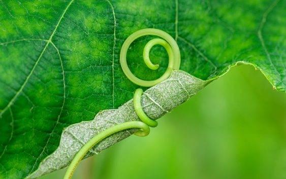 Czy rośliny rosną przez całe życie?