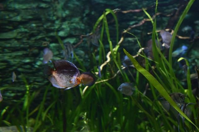 Choroby roślin akwariowych
