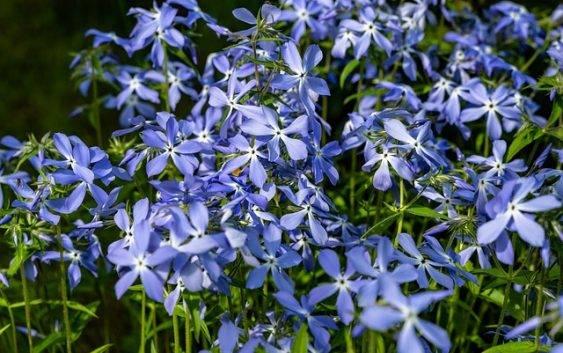 Niebieski ogród