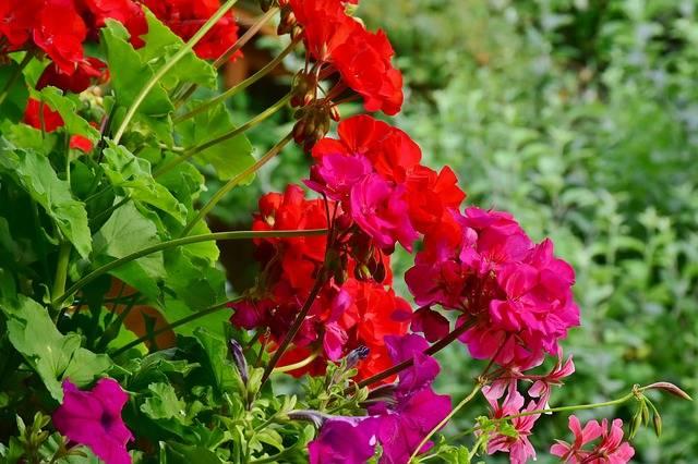 choroby roślin balkonowych zapewnienie światła roślinom